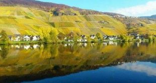 318523 310x165 - Wellness an der Mosel