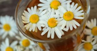 Kamille 310x165 - Rosacea - wenn die Haut überempfindlich auf Reize reagiert