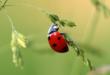 Marienkaefer 110x75 - Insektenschutz – Schädlinge mit natürlichen Mitteln fernhalten